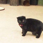 吉祥寺の猫カフェ「てまりのおうち」